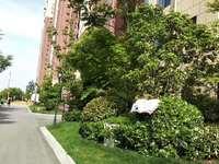 玫瑰郡 高档小区 精装全配 三室两厅 实验小区六中学区 物业绿化特别好
