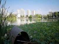 直降5万精装带地暖南京旁大学城对面轻轨口明湖板块核心区