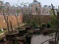 天安都市花园西区 洋房顶楼复式精装全配 送车位和储藏室