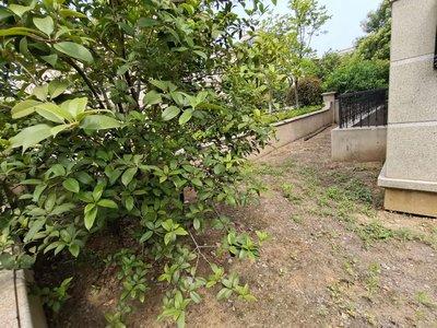 高速公园壹号别墅148平 送花园 送车位 送地下室 送露台 实用200多面积
