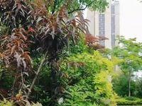 出售琅琊新区现房翡翠湾洋房3室2厅1卫118平米109万住宅