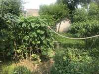 西涧花园对面民房 前后院子