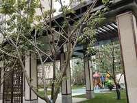 高铁站.地铁口.4楼.100平米.3室2厅.33万 现房